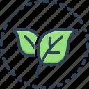 leaf, fresh, green, natural, vane, petal, ecology