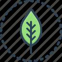 leaf, plant, floral, foliage, fresh, green, natural