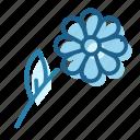 bloom, chamomile, flower, petal, plant, weed