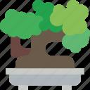 bonsai, nature, tree icon