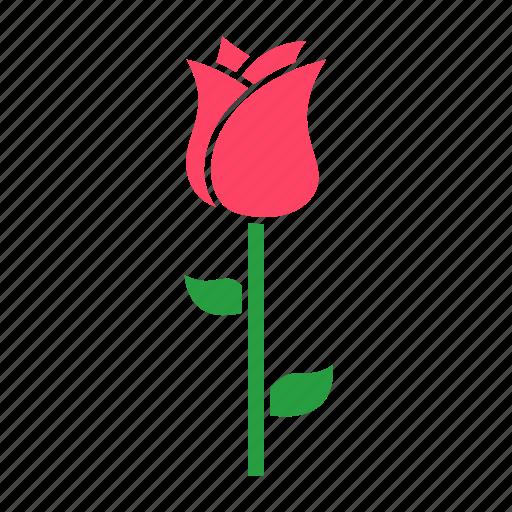 flower, gift, rose icon