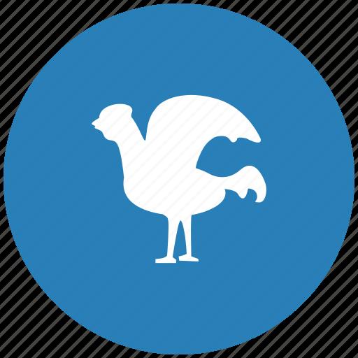 bird, chicken, cock, fly, round icon