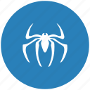 insector, round, spider, tarantula icon