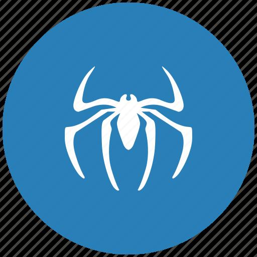insector, round, spider, tarantula icon