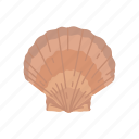 marine animal, ornament, scallop, scallop shell, seafood, shell icon