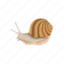 animal, land snail, mollusc, mollusk, sea snail, shell, snail icon