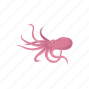 animal, food, marine animal, mollusc, mollusk, octopus, seafood icon