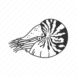 chambered nautlius, mollusc, nautilus icon