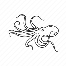 mollusc, octopus icon