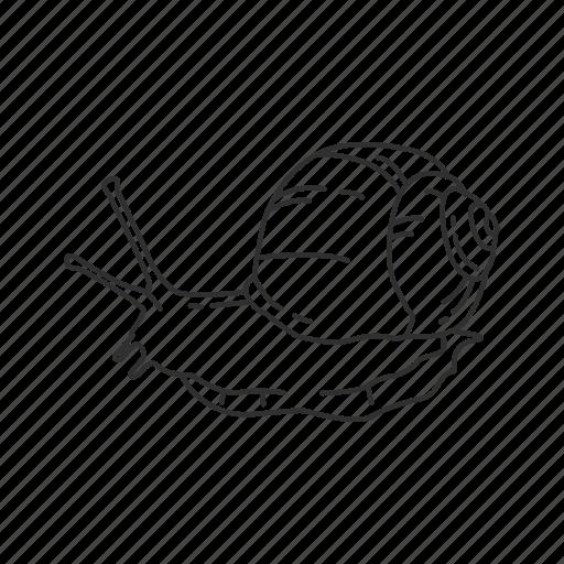 mollusc, slow, slug, snail icon