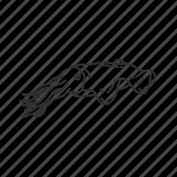 mollusc, squid icon