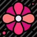 flower, daisies, petals, botanical, flowers