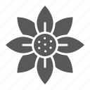blossom, flora, floral, flower, garden, spring