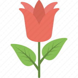 beautiful flower, flower, greeting flower, red flower, rose icon