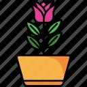 blossom, flower, nature, plant