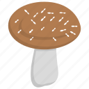 edible mushroom, fleshy fruit, ingredient, mushroom, toadstool, vegetable