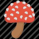 edible mushroom, fleshy fruit, ingredient, mushroom, toadstool, vegetable