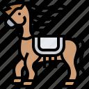 animal, horse, racing, riding, saddle