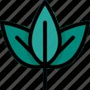 green, leaf, nature, plant, shrub