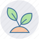 flower, garden, leaf, nature, plant, pot icon