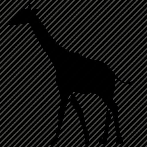 giraffe, life, wild icon