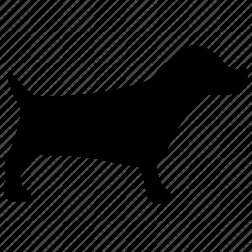 dog, puppy icon