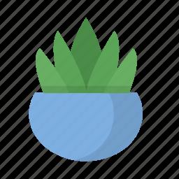 desk, indoor, nature, plant, pot, succulent icon