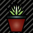 aloe, juice, leaf, healthy, plant, fresh