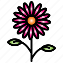 flower, garden, beautiful, spring, nature