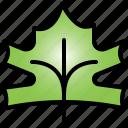 maple, leaf, tree, nature