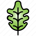 oak, leaf, tree, plant, autumn, foliage