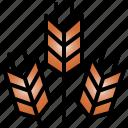 wheat, organic, bread, harvest, nature, barley, food