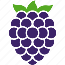 berry, blackberry, food, fruit, organic, raspberries, rosaceae icon