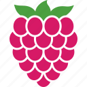 berry, food, fruit, organic, raspberries, raspberry, rubus icon