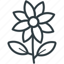 bloodroot flower, bloodroot on stem, flower, nature, spring flower