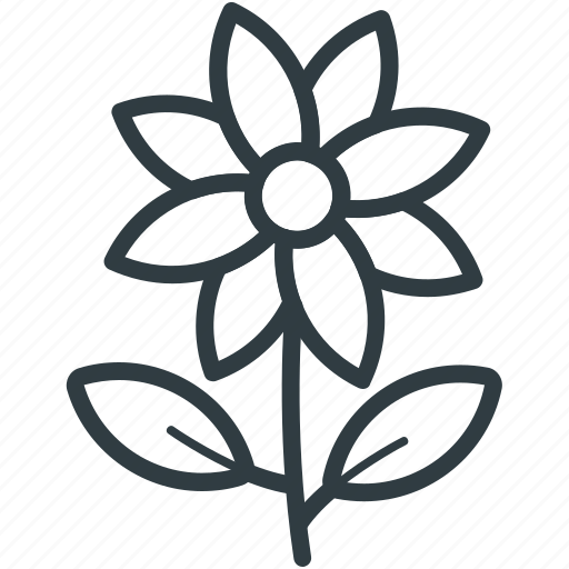 bloodroot flower, bloodroot on stem, flower, nature, spring flower icon