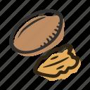 food, healthy, nut, pecan, protein, snack icon