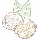 food, healthy food, nature, nuts, walnut, walnuts icon