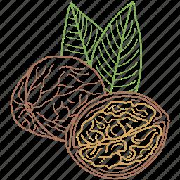 food, healthy food, nature, nuts, walnut, walnuts icon