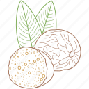 cake, food, healthy food, nutmeg, nuts, organic icon