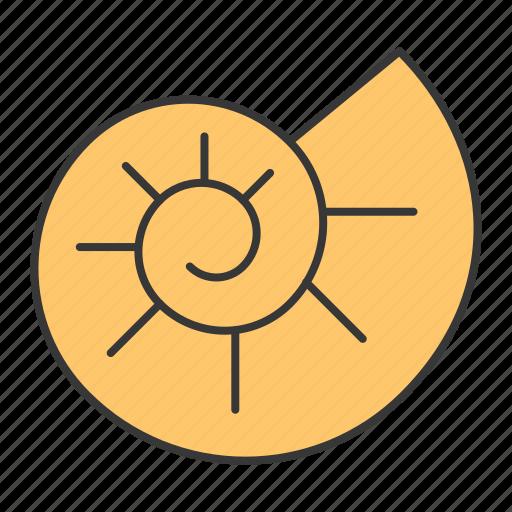 ammonite, ocean, shell icon