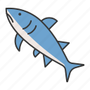 aquatic animal, fish, ocean, shark icon