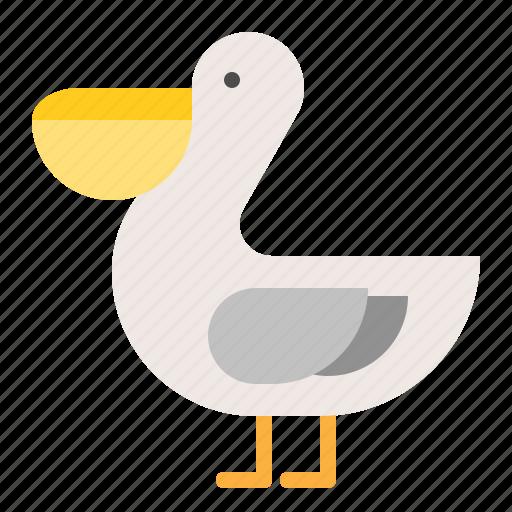 animal, bird, ocean, pelican bird icon