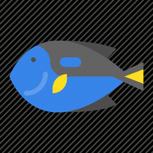 aquatic animal, fish, ocean, palette surgeonfish, sea icon