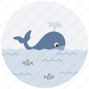 fish, marine, ocean, sea, water, whale icon