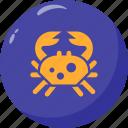 aquatic, cancer, crab, hermit