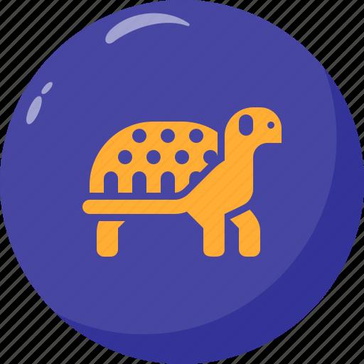 Animal, corslet, slow, turtle icon