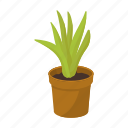 cactus, equipment, indoor, interior, office, plant, pot icon