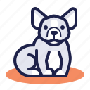 bulldog, dog, french bulldog, friendly, pet icon