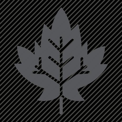 autumn, foliage, leaf, maple, nature icon